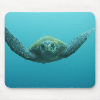 Green Turtle Chelonia mydas agassisi Central Mousepads