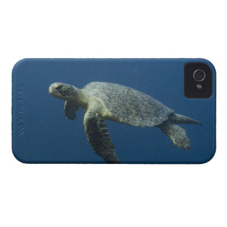 Green Turtle (Chelonia mydas agassisi) off Wolf iPhone 4 Case-Mate Cases