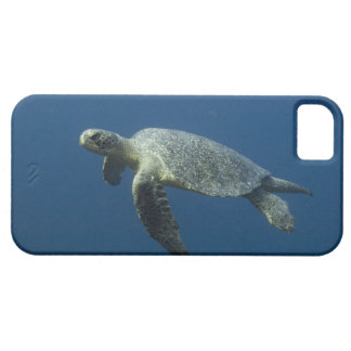 Green Turtle (Chelonia mydas agassisi) off Wolf iPhone 5 Cases