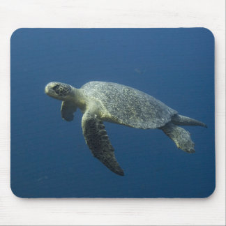 Green Turtle Chelonia mydas agassisi off Wolf Mousepad