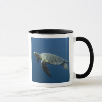 Green Turtle (Chelonia mydas agassisi) off Wolf Mug