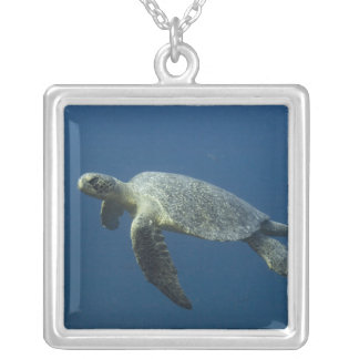 Green Turtle (Chelonia mydas agassisi) off Wolf Silver Plated Necklace