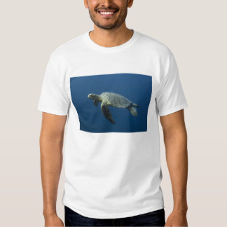 Green Turtle (Chelonia mydas agassisi) off Wolf Tee Shirt