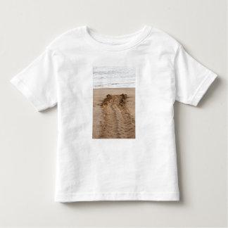 Green Turtle Chelonia mydas agassisi) Tracks Shirts