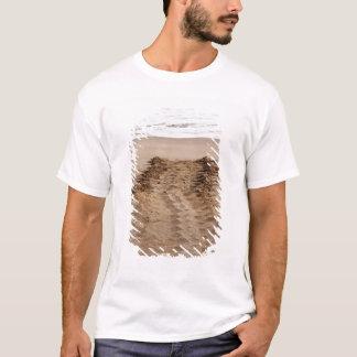 Green Turtle Chelonia mydas agassisi) Tracks T-Shirt