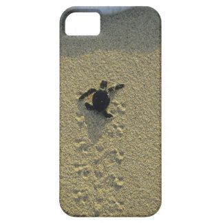 Green Turtle, (Chelonia mydas), hatchling iPhone 5 Case