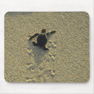 Green Turtle, (Chelonia mydas), hatchling Mousepads