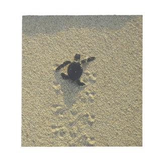 Green Turtle, (Chelonia mydas), hatchling Notepad