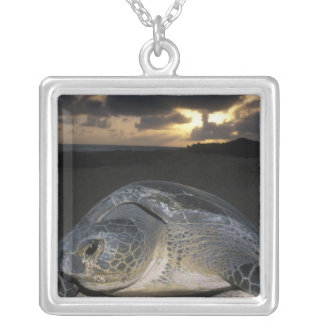 Green Turtle, (Chelonia mydas) nesting female on Silver Plated Necklace