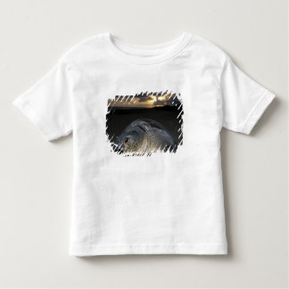 Green Turtle, (Chelonia mydas) nesting female on Toddler T-Shirt