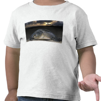 Green Turtle, (Chelonia mydas) nesting female on T Shirts