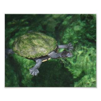 Green Turtle Fine Art Print