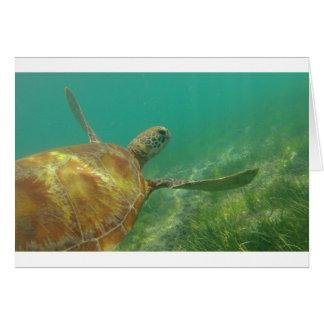 Green-turtle-Great-Barrier-Reef.JPG Card