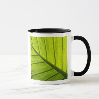 Green veined leaves of tropical foliage in 2 mug