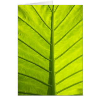 Green veined leaves of tropical foliage in card
