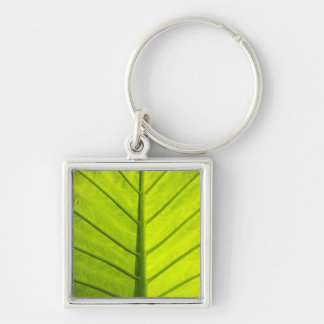 Green veined leaves of tropical foliage in key ring