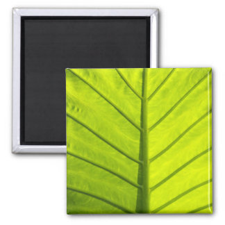 Green veined leaves of tropical foliage in magnet