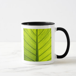 Green veined leaves of tropical foliage in mug