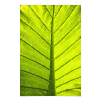 Green veined leaves of tropical foliage in art photo