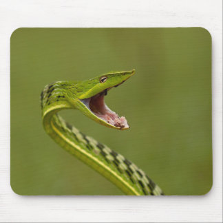 Green Vine Snake Mouse Pad