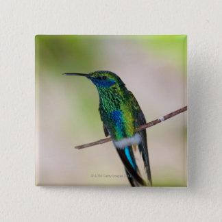 Green Violet-ear Hummingbird 15 Cm Square Badge
