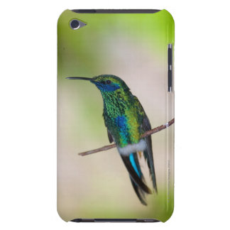 Green Violet-ear Hummingbird Barely There iPod Cases