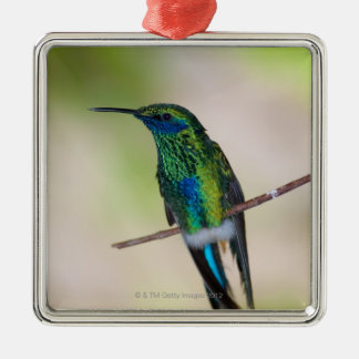 Green Violet-ear Hummingbird Christmas Ornament