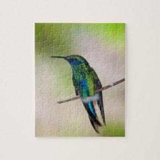 Green Violet-ear Hummingbird Jigsaw Puzzle