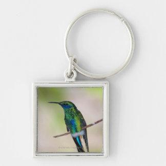 Green Violet-ear Hummingbird Key Ring