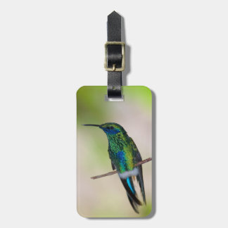 Green Violet-ear Hummingbird Luggage Tag