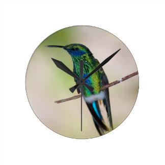 Green Violet-ear Hummingbird Round Clock