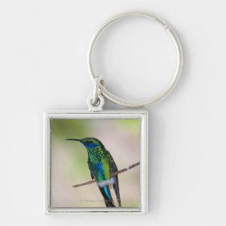 Green Violet-ear Hummingbird Silver-Colored Square Key Ring