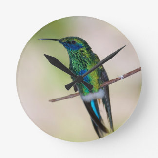 Green Violet-ear Hummingbird Wallclocks