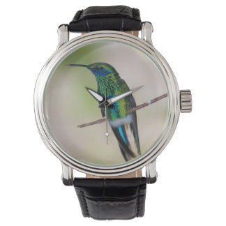 Green Violet-ear Hummingbird Watch