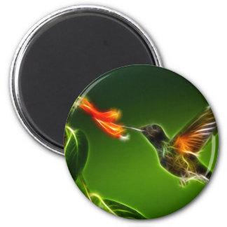 Green Violetear Hummingbird Magnet