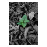 Green weed black and white