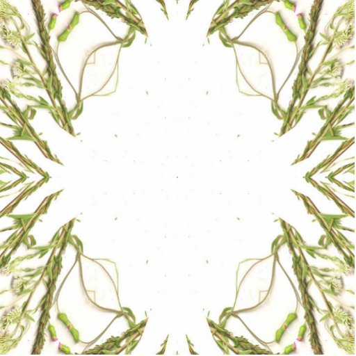Green weeds kaleidoscope image photo cutout