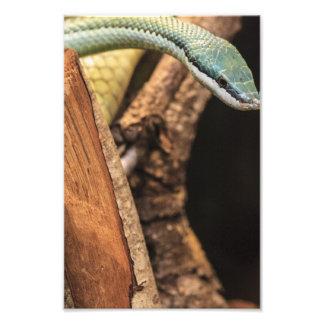 Green White and Yellow Snake Photo Art
