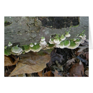 Green & White Striped Shelf Fungi on Log Greeting Card