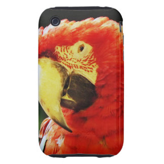 Green Winged Macaw Parrot Bird Close-Up Tough iPhone 3 Covers