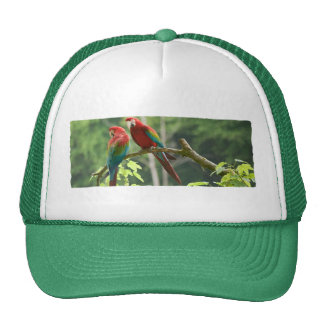 Green-winged Macaws Cap