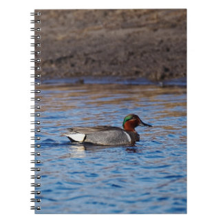 Green-Winged Teal Drake Notebook