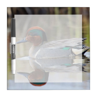 Green-winged Teal Dry Erase Whiteboard