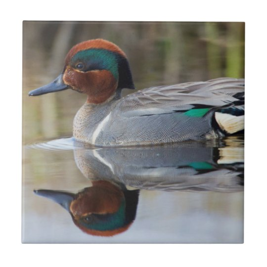 Green-winged Teal Small Square Tile