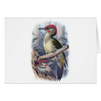 Green Woodpecker Card