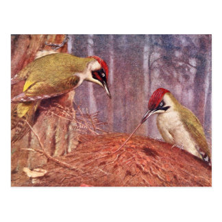 Green Woodpecker Couple Eating Ants Postcards