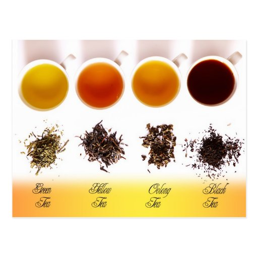 Green, Yellow, Oolong, and Black Tea Post Card