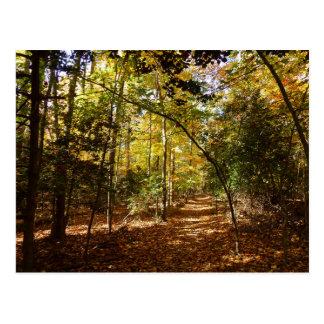 Greenbelt Park in Fall I Maryland Nature Scene Postcard
