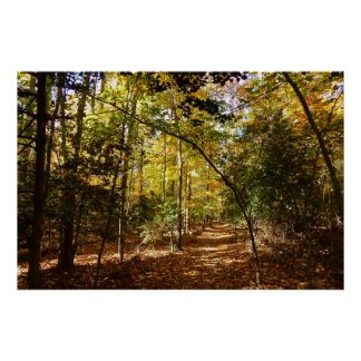 Greenbelt Park in Fall I Maryland Nature Scene Poster