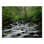 Greenbrier area area, Great Smoky Mountains Poster